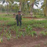 Mahasiswa KKM  Umuslim benahi objek wisata Agropolitan di Desa Cot Jrat
